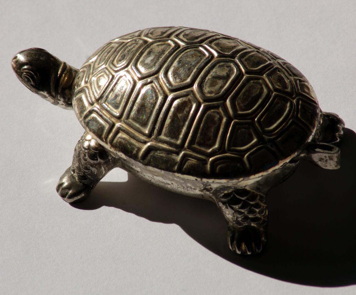 Die kleine silberne Schildkröte